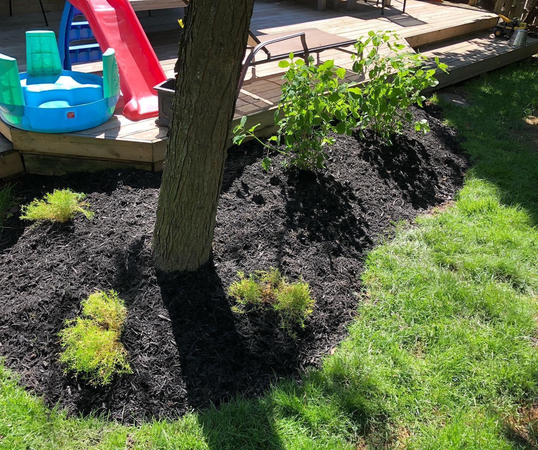 A garden with black mulch.